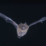 Human brain's 'bat sight' found