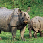 Good news for rhinos in Nepal