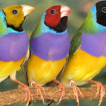 Bird's head colour determines its personality