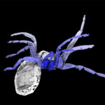 Creepy New Fossil Shows the Dawn of Spiders